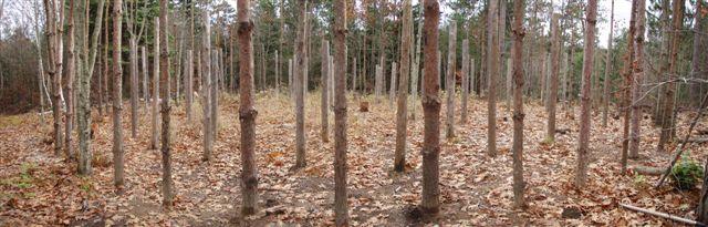 Forest Woodhenge Panorama