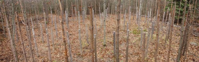 Forest Woodhenge Panorama (2)