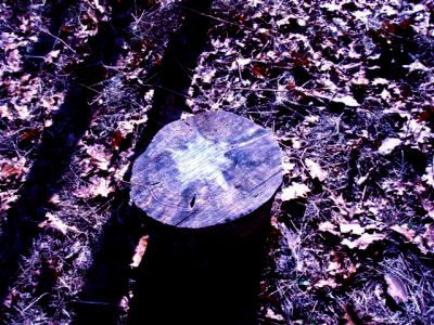 Forest Woodhenge-MidFall - Star Stump