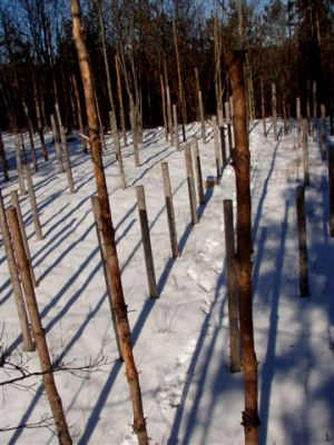 Forest Woodhenge: Winter Solstice: True Noon (3)