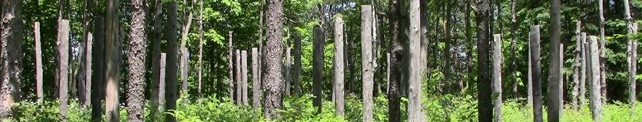 Forest Woodhenge